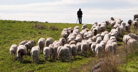 I Am the Good Shepherd - Sacred Journeys Spiritual Community